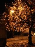 Träd av oktober royaltyfri bild