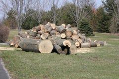 Träd avverkat, klippt som sparkas bakut, Royaltyfri Foto