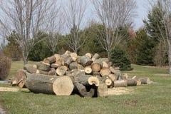 Träd avverkat, klippt som sparkas bakut, Arkivbilder