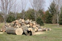 Träd avverkat, klippt som sparkas bakut, Royaltyfri Fotografi