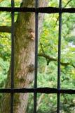 Träd bak poler Arkivfoto