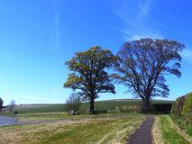 Träd & bana Nr Crookham norr Northumberland, England Arkivfoto