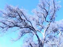 Träd & blå himmel Arkivbilder