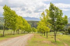 Träd blir gula på slutet av sommar arkivfoton