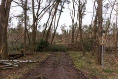 Träd blockerar skogvägen efter stormen arkivfoto
