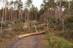 Träd blockerar skogvägen efter stormen royaltyfri bild