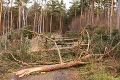 Träd blockerar skogvägen efter stormen fotografering för bildbyråer