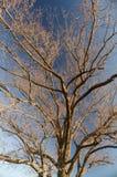 Träd Brannches Fotografering för Bildbyråer