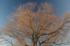 Träd Brannches Arkivfoton
