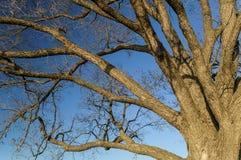 Träd Brannches Royaltyfri Fotografi