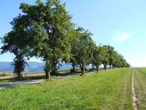 Träd bredvid de Arkivbilder