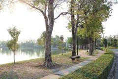 Träd bredvid dig, när du går Royaltyfria Foton