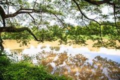 Träd bredvid floden Arkivfoton
