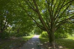 Träd bredvid landsbanan Royaltyfri Bild