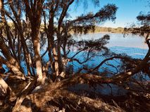 Träd bredvid sjön royaltyfri foto