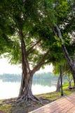 Träd bredvid sjön Arkivfoto