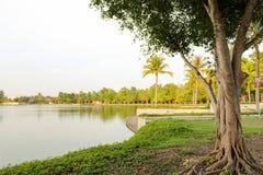 Träd bredvid sjön Royaltyfri Bild