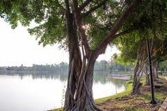 Träd bredvid sjön Arkivbild