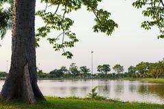 Träd bredvid vatten på parkera Arkivbilder