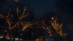 Träd dekorerade med festliga ljus för jul på natten lager videofilmer