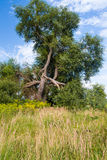 Träd efter blixtslag Royaltyfria Bilder