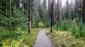 Träd efter en Forest Fire Royaltyfri Bild