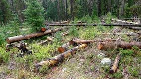 Träd efter en Forest Fire Royaltyfri Fotografi