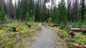Träd efter en Forest Fire Royaltyfria Foton