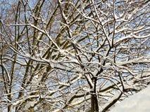 Träd efter en tung snö Arkivbild