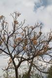 Träd efter nedgång royaltyfri foto