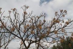Träd efter nedgång royaltyfria foton