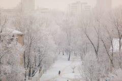 Träd efter tungt snöfall Typisk vintermorgon i staden royaltyfria bilder