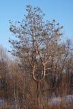 Träd en ljusstake Arkivbilder
