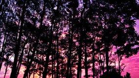 Träd en solnedgång fotografering för bildbyråer