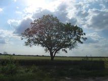 Träd fält, hed i vojvodinaen, Serbien arkivbilder