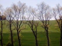 Träd & fält Nr Crookham norr Northumberland, England Royaltyfria Foton