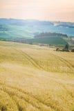 Träd, fält och atmosfär i Tuscany, Italien Royaltyfria Foton