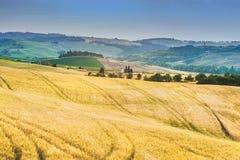Träd, fält och atmosfär i Tuscany, Italien Royaltyfri Fotografi