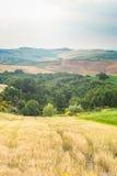 Träd, fält och atmosfär i Tuscany, Italien Arkivfoto