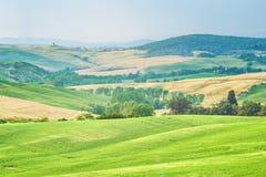 Träd, fält och atmosfär i Tuscany, Italien Royaltyfri Foto