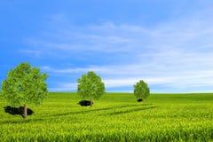 Träd, fält och härlig himmel royaltyfria bilder