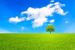 Träd, fält och härlig himmel Royaltyfri Bild