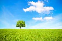 Träd, fält och härlig himmel Fotografering för Bildbyråer