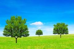 Träd, fält och himmel royaltyfri bild