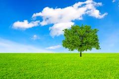Träd, fält och himmel royaltyfria bilder