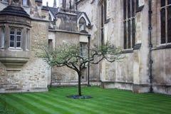 Träd för äpple för Newton ` s Royaltyfri Bild