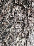 Träd för ‹för big†för ‹för a†för ‹för of†för ‹för The†‹bark†royaltyfri bild