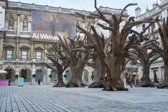 Träd för Ai Wei Weis på den kungliga akademin av konster Arkivfoto