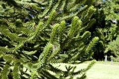 Träd för apapussel Arkivfoton