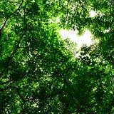 Träd för bakgrund Royaltyfri Foto